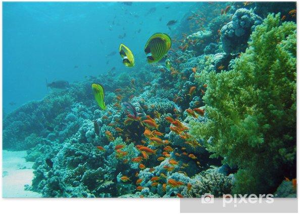 Plakát Korálový útes - Korálové útesy