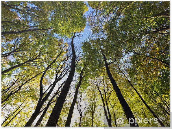 Plakat Korony drzew - Las