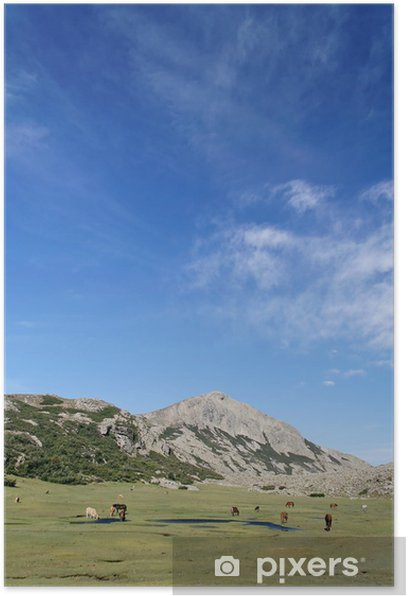 Plakat Korsyka - dzikie konie - Europa