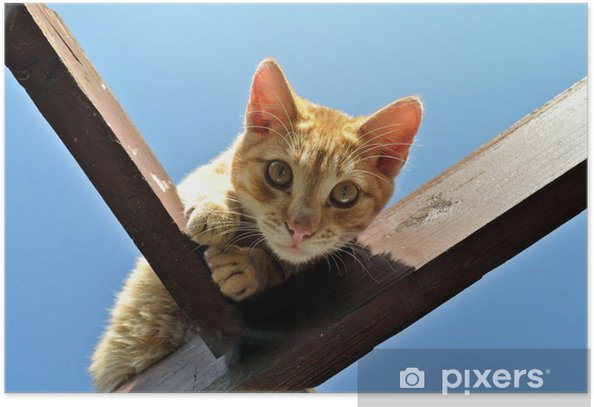 Plakat Kot domowy - Ssaki