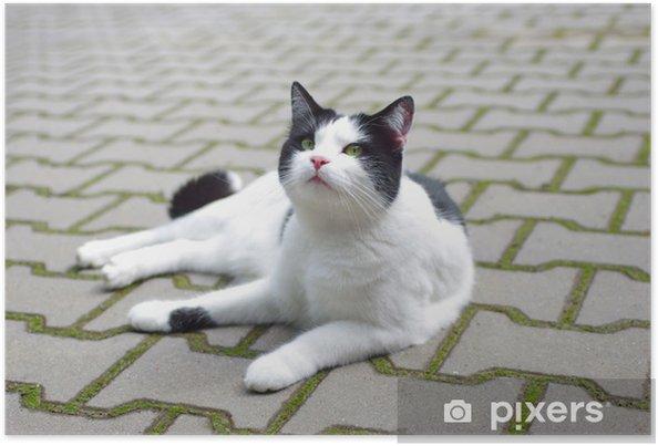 Plakat Kot Leży Na Ziemi Na Zewnątrz Pixers żyjemy By Zmieniać