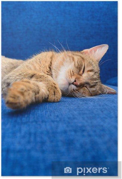 Plakat Kot śpi - Ssaki