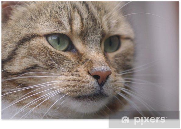 Plakat Kot - Zabytki