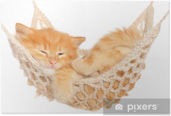 Plakat Kotek śliczny rudowłosy spania w hamaku - Wakacje