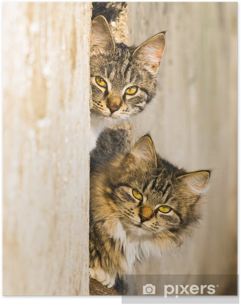 Plakat Koty wiosna - Ssaki
