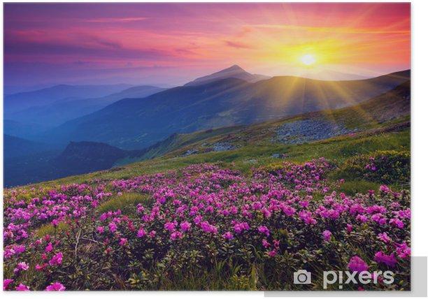 Plakat Krajobraz górski z purpurowymi kwiatami - Tematy