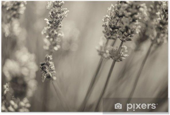 Plakát Krásné levandulová pole Provence, Francie v červenci - Květiny