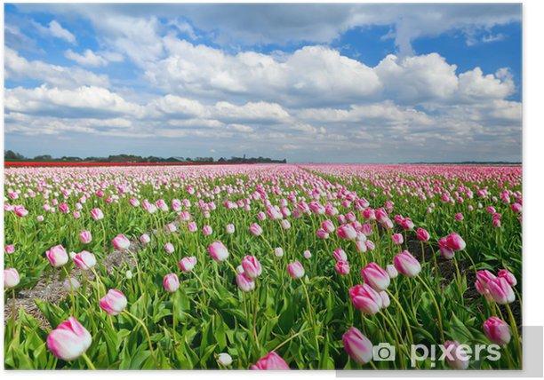 Plakat Kremowe różowe tulipany na holenderskim polu i błękitne niebo - Tematy