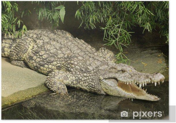 Plakat Krokodyl - Inne Inne