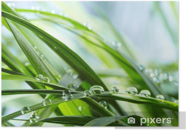 Plakat Krople wody na zielonej trawie - Rośliny