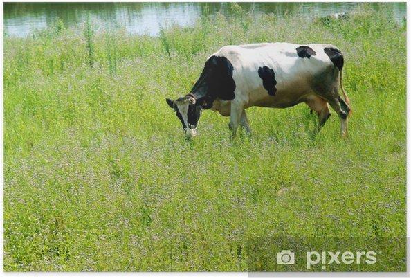Plakat Krów mlecznych - Ssaki