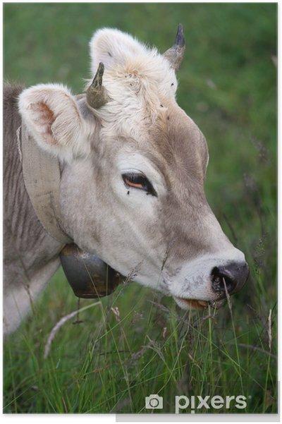 Plakat Krowa - Ssaki