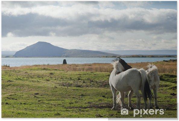 Plakat Kucyki w Islandii krajobrazu - Europa