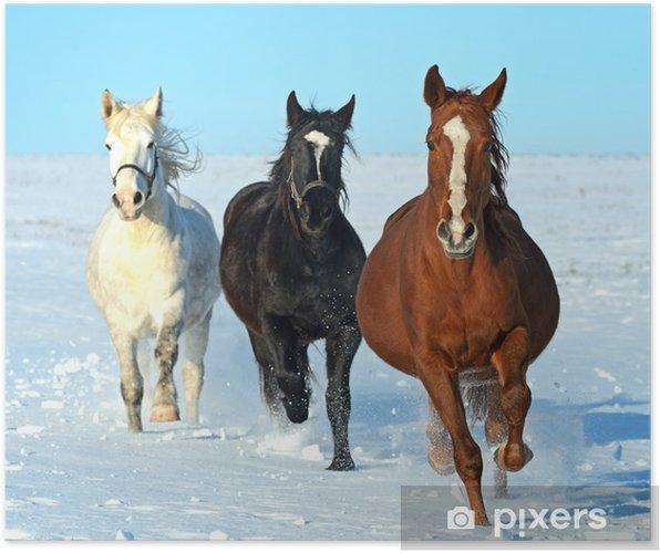 Plakát Kůň - Témata