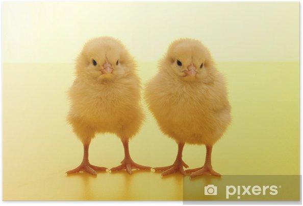 Plakat Kurczak - Święta międzynarodowe