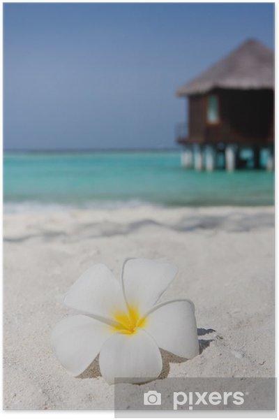 Plakát Květina na bílé písečné pláži - Voda