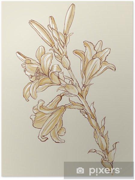 Plakat Kvetiny Lilie Na Kresleni Leonardo Da Vinci Na Zaklade