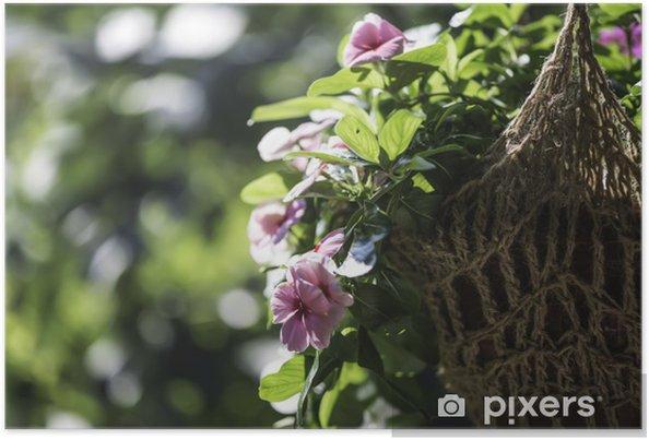 Plakát Květiny visí hrnec - Květiny