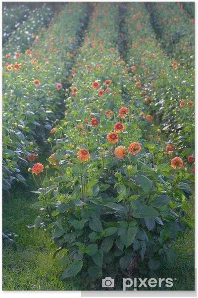 Plakát Květiny - Květiny
