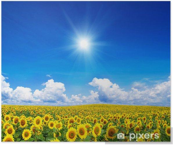 Plakát Kvetoucí pole slunečnice na modré obloze - Témata