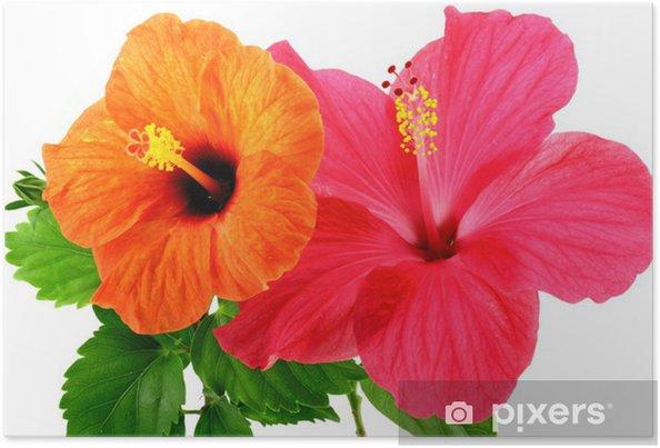 Plakát Květy ibišku - Květiny