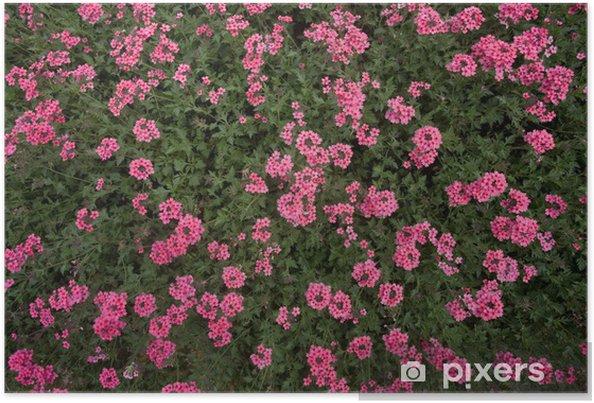 Plakát Kvitina eervena - Květiny