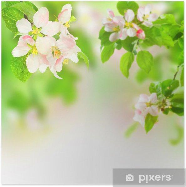Plakat Kwiat jabłoni - Jabłonie