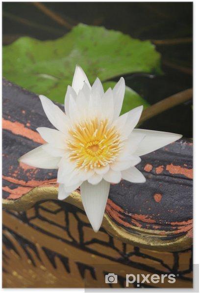 Plakat Kwiat lotosu - Kwiaty