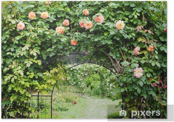 Plakat Kwiat róży - Kwiaty
