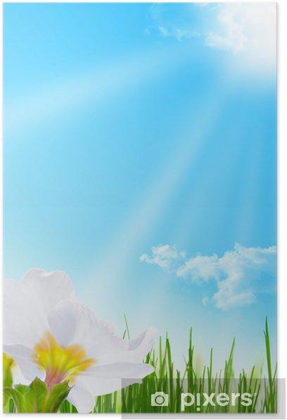 Plakat Kwiat wiosny Image - błękitne niebo i trawa w ogrodzie - Dom i ogród