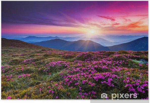 Plakat Kwiat - Łąki, pola i trawy