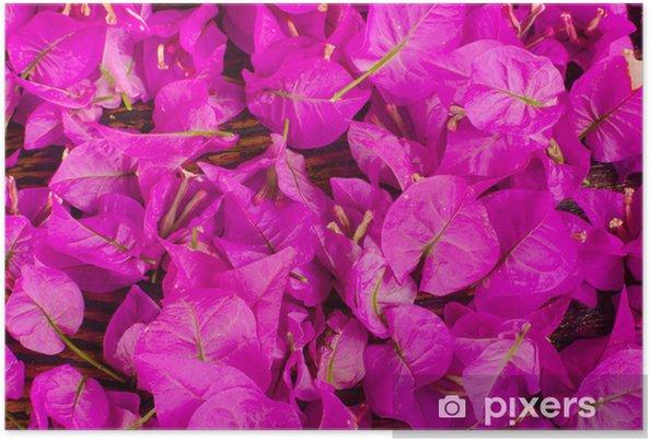 Plakat Kwiaty Bougainvillea - Tła