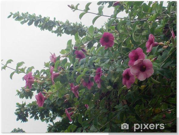 Plakat Kwiaty I Liście W Altanie