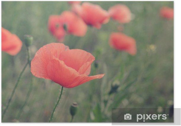Plakat Kwiaty maku - Kwiaty