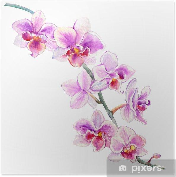 Plakat Kwiaty Orchidei Akwarela Ręcznie Rysowane Ilustracji Botanicznych Na Białym Tle Na Wzór Projektu Pakiet Kosmetyczne Karty Z Pozdrowieniami