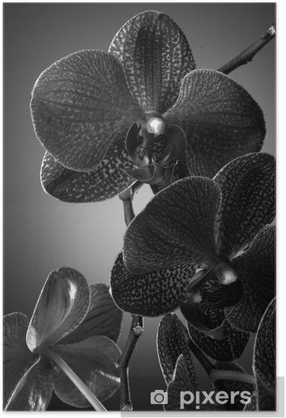 Plakat Kwiaty orchidei - Tematy