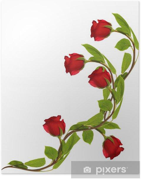 Plakat Kwiaty róże na białym tle - Kwiaty