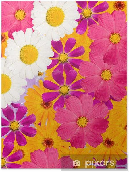 Plakat Kwiaty rumianku - Kwiaty