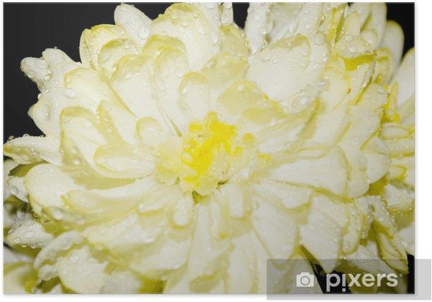 Plakat Kwiaty - Krajobraz wiejski