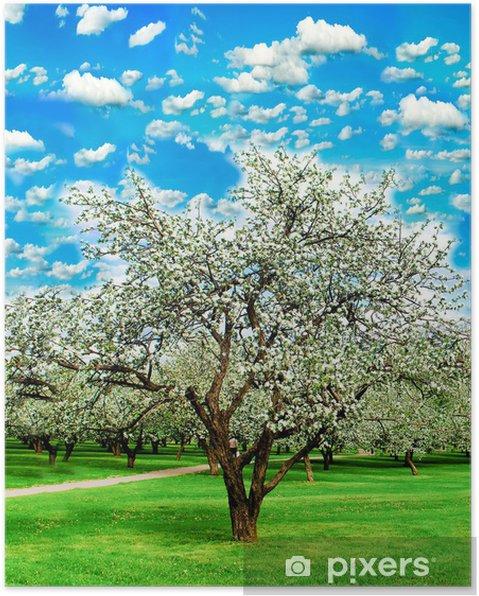 Plakat Kwitnące jabłonie na jaskrawe nieba w ogrodzie - Jabłonie