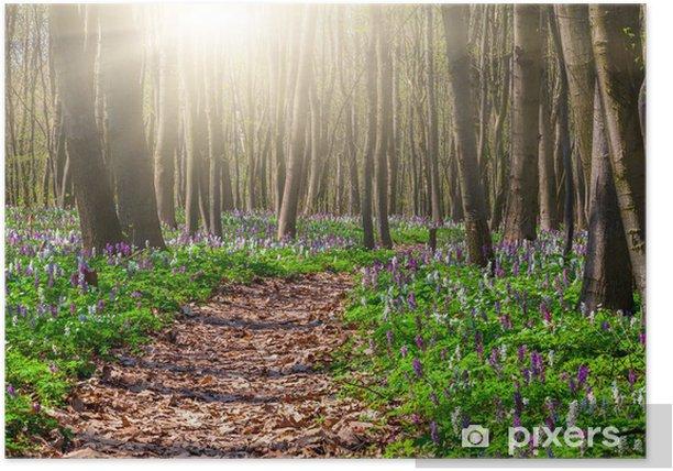 Plakat Kwitnące pola kwiatów w wiosennym lesie - Lasy