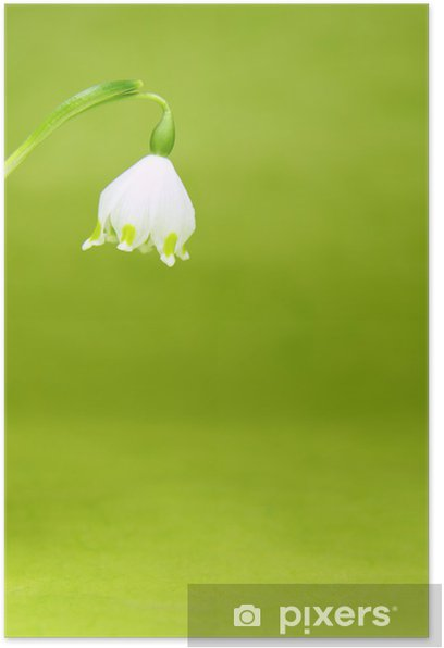 Plakat Kwitnące żonkile - Pory roku