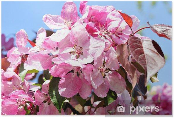 Plakat Kwitnie śliwkę - Pory roku