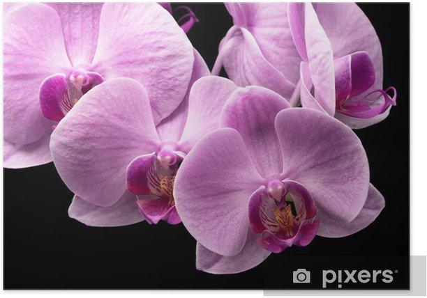 Plakát Kytice z purpurové orchideje - Květiny