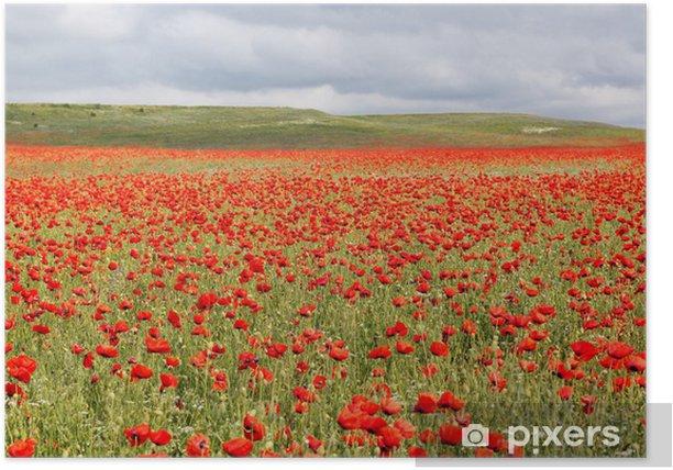 Plakat Ładne pole czerwonych maków - Krajobraz wiejski