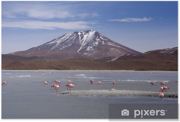 Plakát Laguna celeste, Flamingos, Bolivia - Amerika