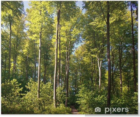 Plakat Las bukowy - Cuda natury