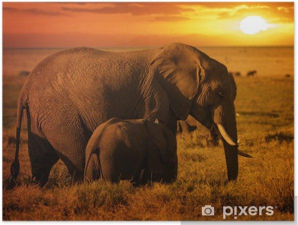 Plakat Las słoń z jej łydki o zachodzie słońca - Tematy