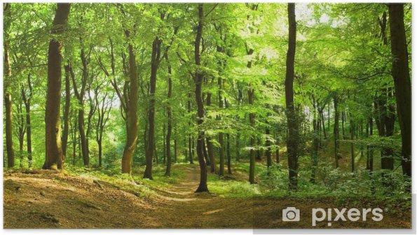 Plakat Las w lecie - Przeznaczenia