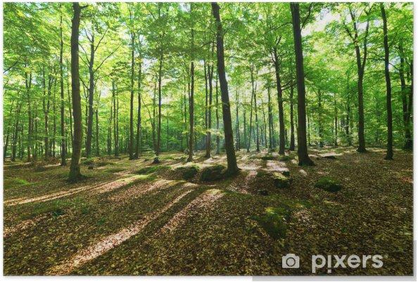Plakat Las - Drzewa